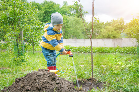 Photo pour the little boy in the garden, watering the tree planted by strands of sapling from a hose, on a sunny day - image libre de droit