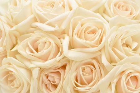 Photo for Beautiful white rose background - Royalty Free Image