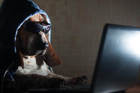 Dog sitting at a laptop