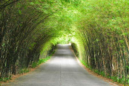 Photo for The walkway of bamboo road to long destination - Royalty Free Image