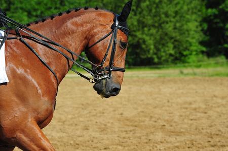 Photo pour competition horse - image libre de droit