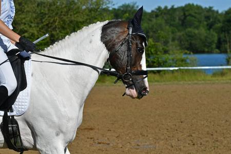 Photo pour Horse contest - image libre de droit