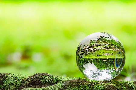Foto de Moss and glass globe - Imagen libre de derechos