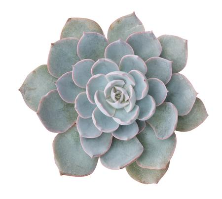 Foto de Cactus plant top view isolated on white background - Imagen libre de derechos