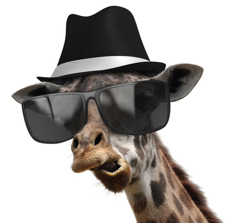 Photo pour Funny animal portrait of a giraffe detective with shades and a fedora - image libre de droit