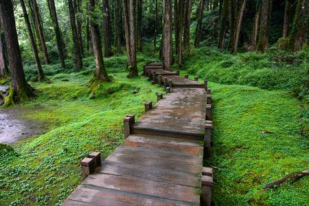 Foto de Boardwalk through peaceful mossy forest at Alishan National Scenic Area in Chiayi District, Taiwan - Imagen libre de derechos