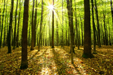 Photo pour autumn forest trees. nature green wood sunlight backgrounds. - image libre de droit