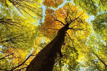 Foto de autumn forest trees. nature green wood sunlight backgrounds. . - Imagen libre de derechos
