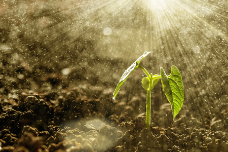 Photo for Green seedling growing on the ground in the rain - Royalty Free Image