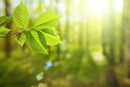 Photo for forest trees leaf. nature green wood sunlight backgrounds. spring, summer - Royalty Free Image