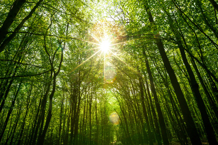 Photo for summer forest trees. nature green wood sunlight backgrounds. sky - Royalty Free Image