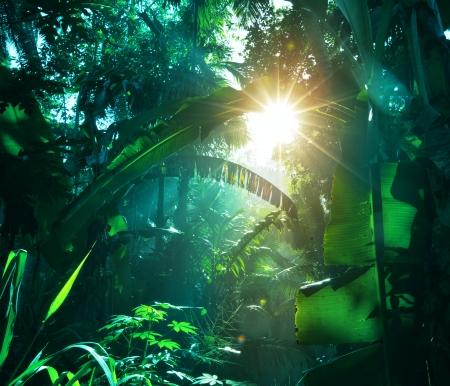 Photo pour jungle in Vietnam - image libre de droit