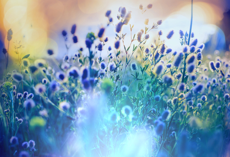 Photo pour Summer flowers meadow - image libre de droit