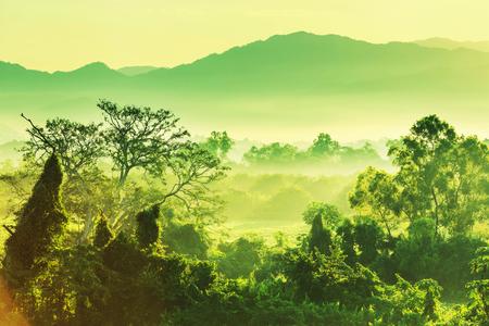 Photo pour tropical jungle in Mexico - image libre de droit