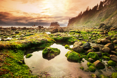 Photo for Olympic National Park landscapes - Royalty Free Image