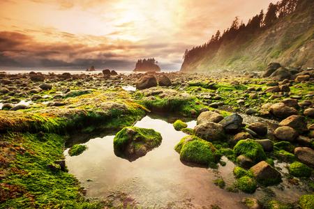 Foto de Olympic National Park landscapes - Imagen libre de derechos