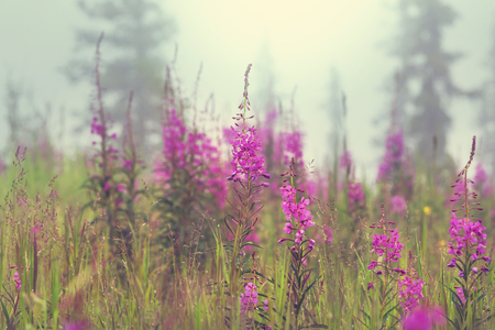 Photo for Summer flowers on the foggy meadow - Royalty Free Image