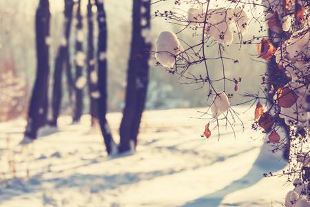 Photo pour Winter scene - image libre de droit