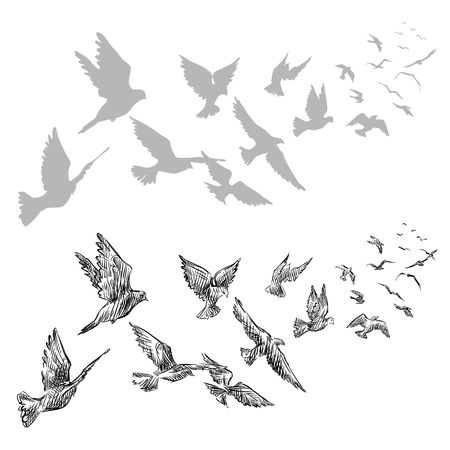 Illustration pour flying pigeons, hand drawn, vector illustration - image libre de droit