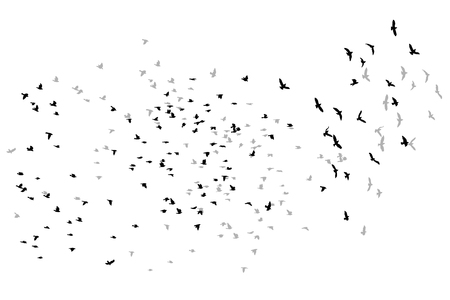 Illustration pour flying birds vector sketch. - image libre de droit