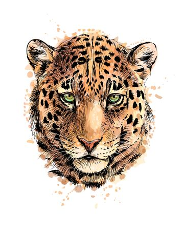 Illustrazione per Portrait of a leopard head from a splash of watercolor, hand drawn sketch. Vector illustration of paints - Immagini Royalty Free