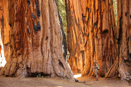 Photo pour Family with boy visit Sequoia national park in California, USA - image libre de droit