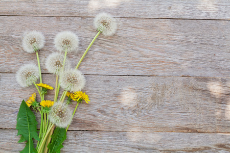 Foto de Dandelion flowers on wooden background with copy space - Imagen libre de derechos