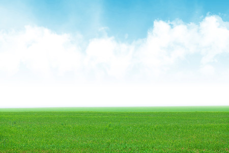 Photo for Green grass field and blue sky background - Royalty Free Image