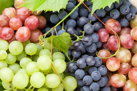 Photo for Bunch of colorful grapes with leaves - Royalty Free Image