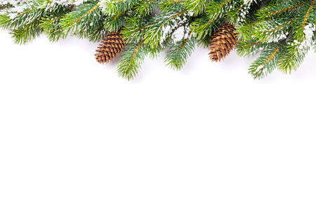 Photo pour Christmas tree branch with snow and pine cones. Isolated on white background with copy space - image libre de droit