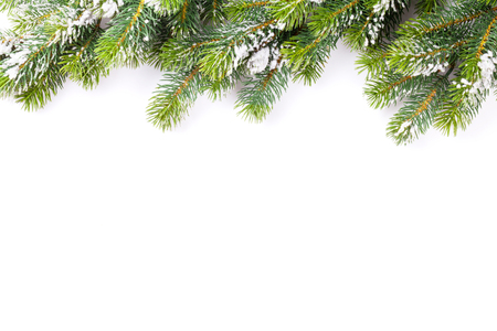 Photo for Christmas tree branch with snow. Isolated on white background with copy space - Royalty Free Image