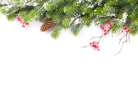 Foto de Christmas tree branch with snow. Isolated on white background with copy space - Imagen libre de derechos