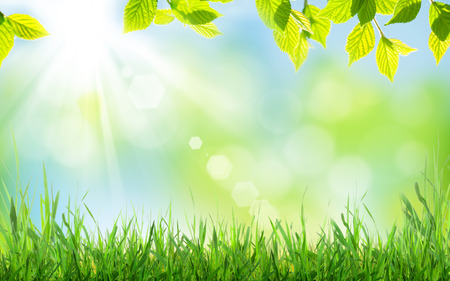 Photo pour Abstract sunny spring background with grass and leaves - image libre de droit