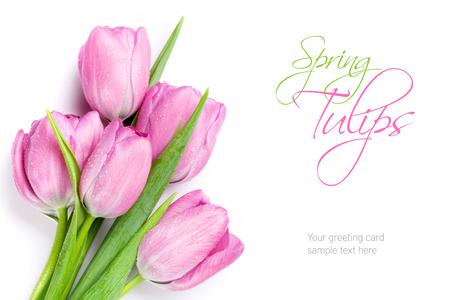 Photo for Fresh pink tulip flowers bouquet. Isolated on white background with copy space - Royalty Free Image