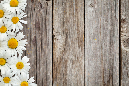 Photo pour Daisy chamomile flowers on wooden background. Top view with copy space - image libre de droit