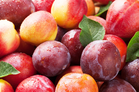 Photo for Fresh ripe peaches and plums closeup - Royalty Free Image