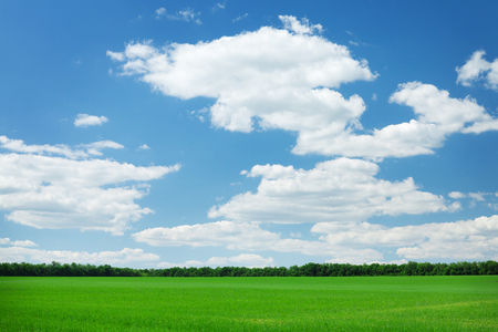 Foto de Green grass field and blue sky background - Imagen libre de derechos