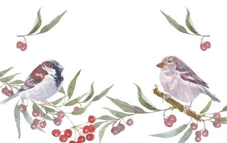 Ilustración de sparrow male and female with berry branches. Watercolor handmade vector illustration - Imagen libre de derechos