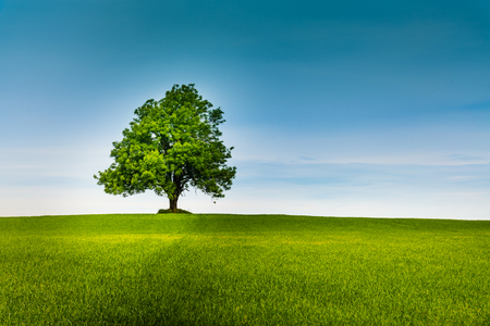 Photo for Lonely tree on a green field and blue sky - Royalty Free Image