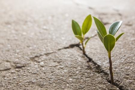 Photo pour weed growing through crack in pavement - image libre de droit