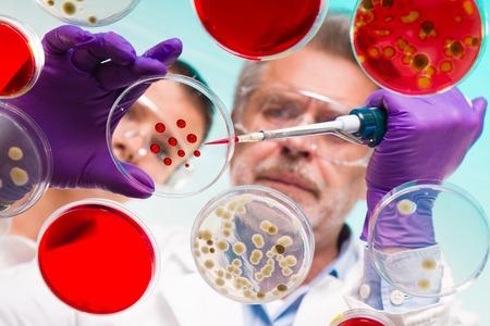 Foto de Focused senior life science professional grafting bacteria in the pettri dishes.  Lens focus on the agar plate. - Imagen libre de derechos