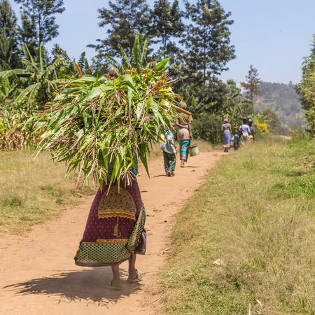 Foto de Rural black african woman carries a bundle of harvested sugar cane on her head returning home from a field labor work. - Imagen libre de derechos