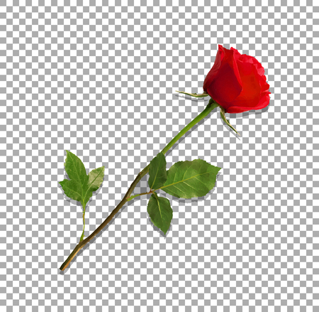 Ilustración de Beautiful bud of red rose on long stem - Imagen libre de derechos