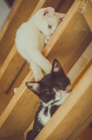 Foto de adorable black and white cats playing on stairs - Imagen libre de derechos