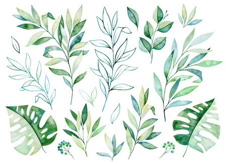Photo pour Watercolor greens collection.Texture with greens, branch, leaves, tropical leaves, foliage.Perfect for wedding, invitations, greeting cards, quotes, pattern, bouquet, logos, birthday cards, your unique create etc. - image libre de droit