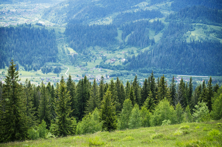 Photo for Pine and spire in the mountains in summer - Royalty Free Image
