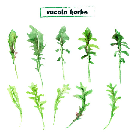Vector set of watercolor arugula herbs on white background. Set of rucola elements.