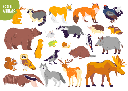 Illustration pour Vector collection of forest animals and birds: bear, fox, hare, owl isolated on white background. Flat hand drawn style. Good for children book illustration, alphabet, woodland banner, zoo emblem etc. - image libre de droit