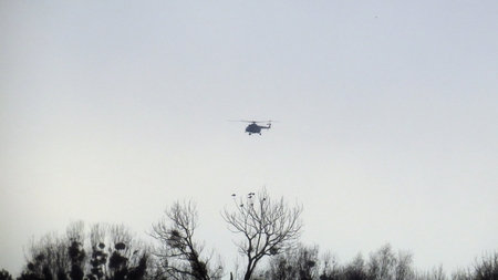 Foto de Helicopter Flying over Trees with Bids and Mistletoe - Imagen libre de derechos