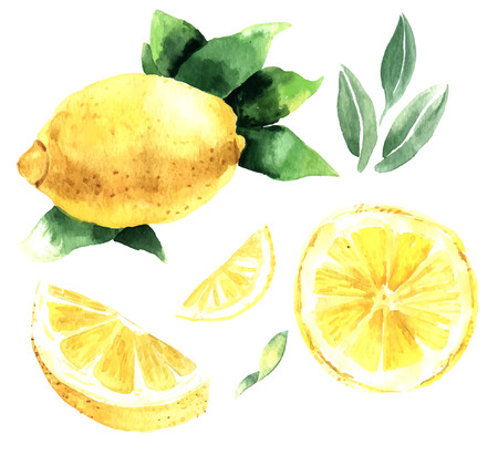 Ilustración de Watercolor set of lemons. Lemon segments, juicy lemon. Vector illustration - Imagen libre de derechos